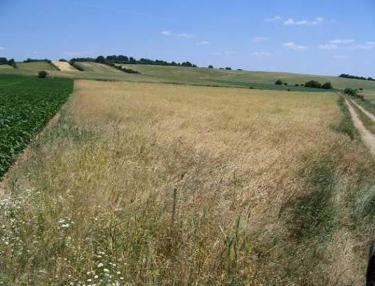 Good friends: near-natural landscapes such as grassland are ideal neighbours for fields.