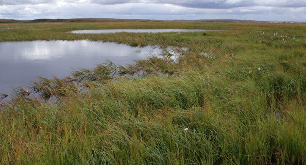 Der Umfang arktischer Feuchtgebiete ist wohl deutlich größer als bisher angenommen – zu dem Schluss kommt ein Projekt des FWF, das spezielle Radarmessungen nutzt.