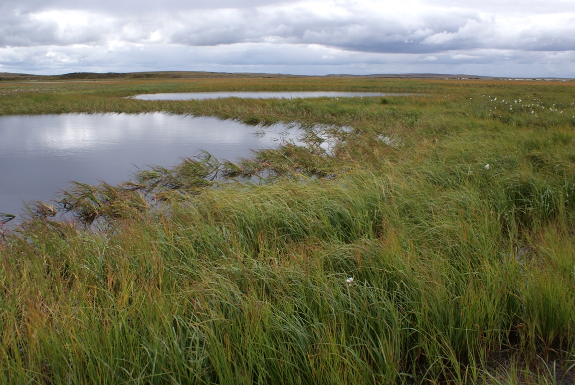 The scale of the Arctic wetlands may be a lot vaster than previously assumed. This is the conclusion of a project supported by the FWF that uses special radar measurements.