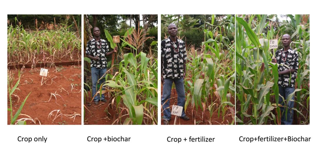 Biokohle beeinflusst den Nährstoffzyklus im Boden und damit auch das Pflanzenwachstum äußerst positiv, wie ein FWF-Projekt belegt. (Im Bild: Feldstudien in Kenia)