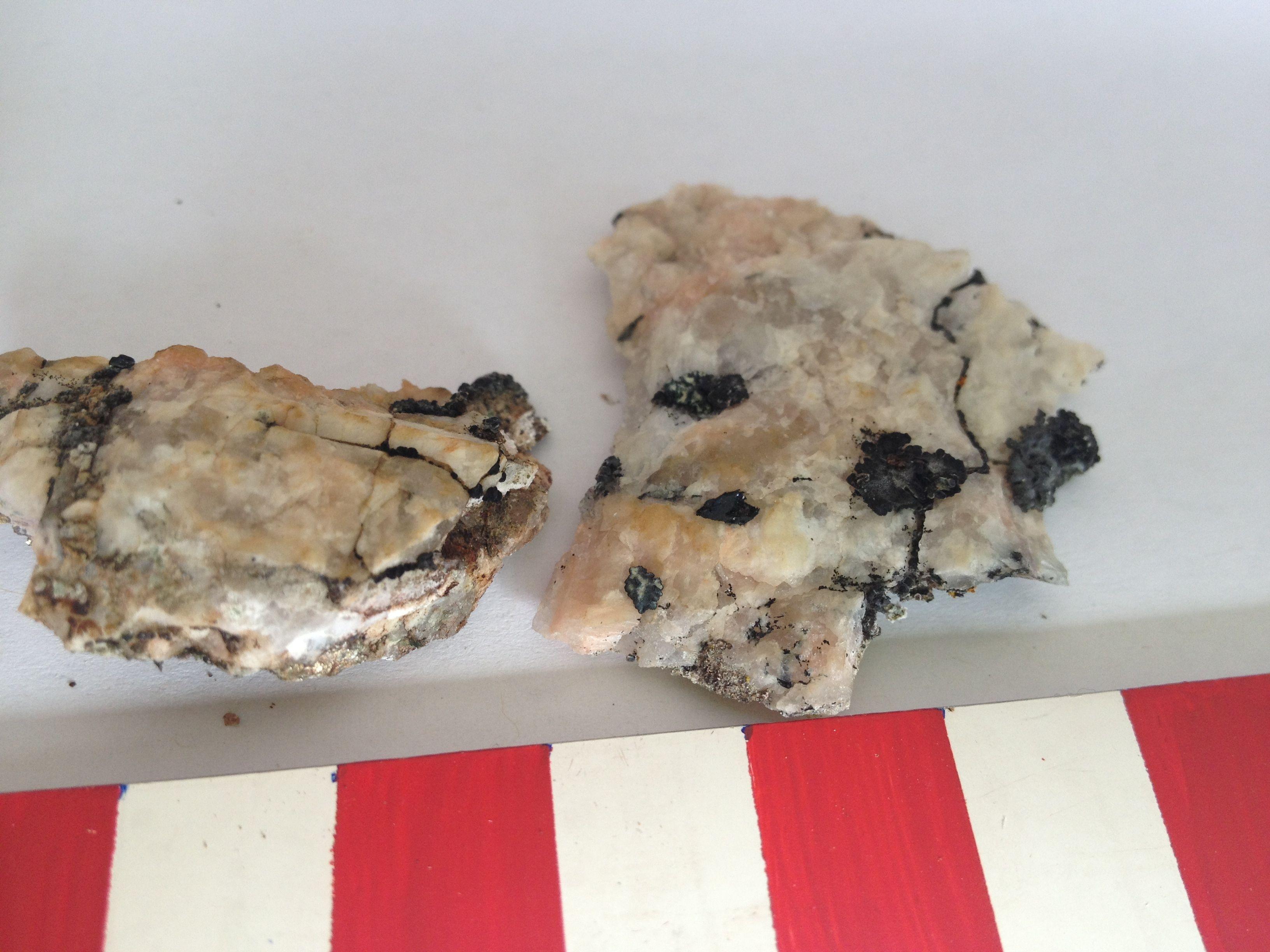 Schwarze Pilze siedeln sich nicht nur auf Steinoberflächen an, sondern auch im Menschen.