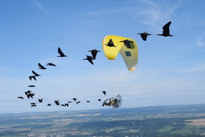 Forscher/innen begleiten Zugvögel in ihr Winterquartier.