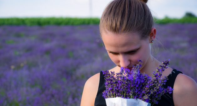 Young woman smelling a bush of lavender, behind her a big lavender field.
