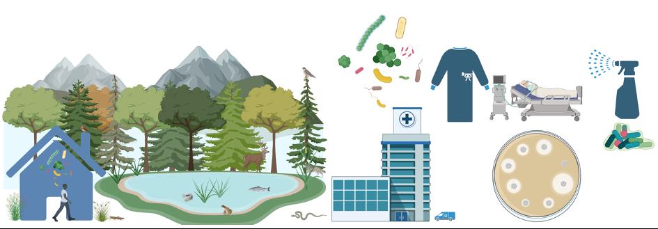Gegenüberstellung der Einflüsse auf die mikrobiellen Gemeinschaften von natürlichen Innenräumen und einer Krankenhausumgebung.