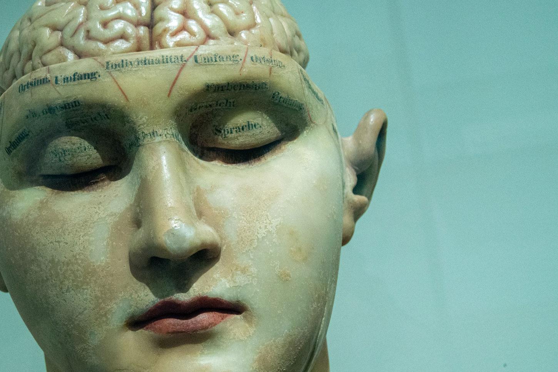 Modell eins Gehirns aus dem frühen 20. Jahrhundert.